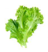 Lettuce Leaf- سلاد پتہ